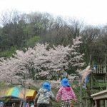 3歳児🌺八森山へお花見にも行ってきました🌺🌺
