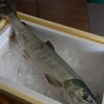 「秋鮭と手作りぱん」