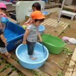 1歳児クラスの水遊びと泥遊び